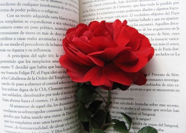 Red Rose In Book