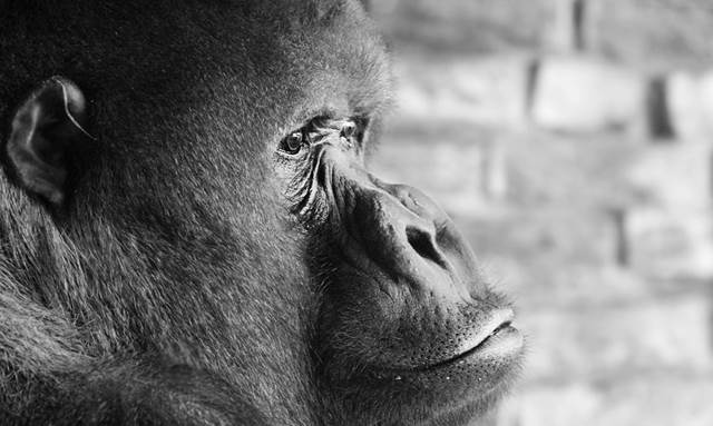 Do animals grieve like humans? Golden Charter